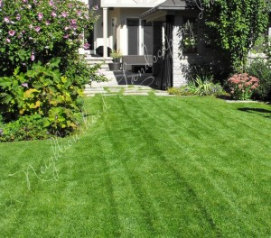 Neighbourhood Landscaping Inc 30 Titan Road Unit 7 Etobicoke ON M8Z 5Y2 Canada