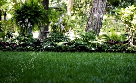 Lawn and Trees